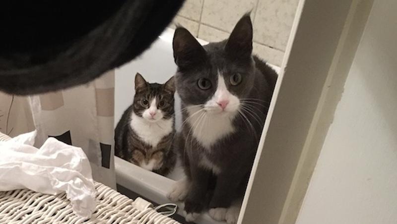 Två katter som är rädda för att bada