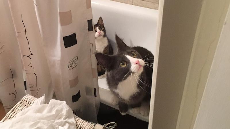 Två katter som är rädda i badkaret