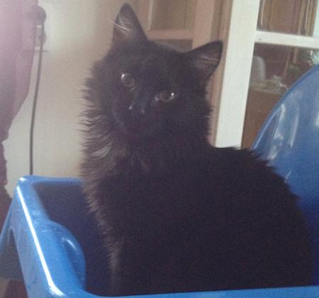 SVart kattunge i låda