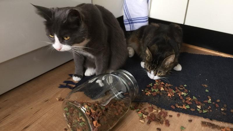 Busiga katter har vält ut torrfoder över hela golvet
