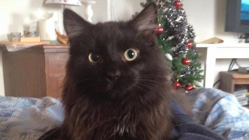 Söt svart kattunge