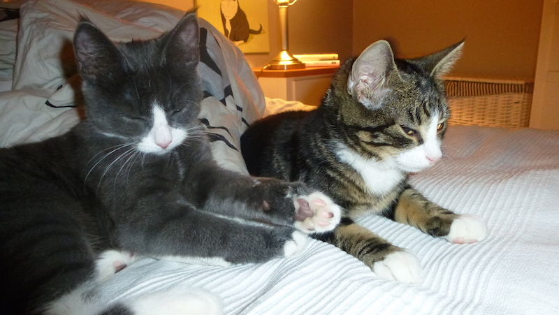 Trötta kattungar