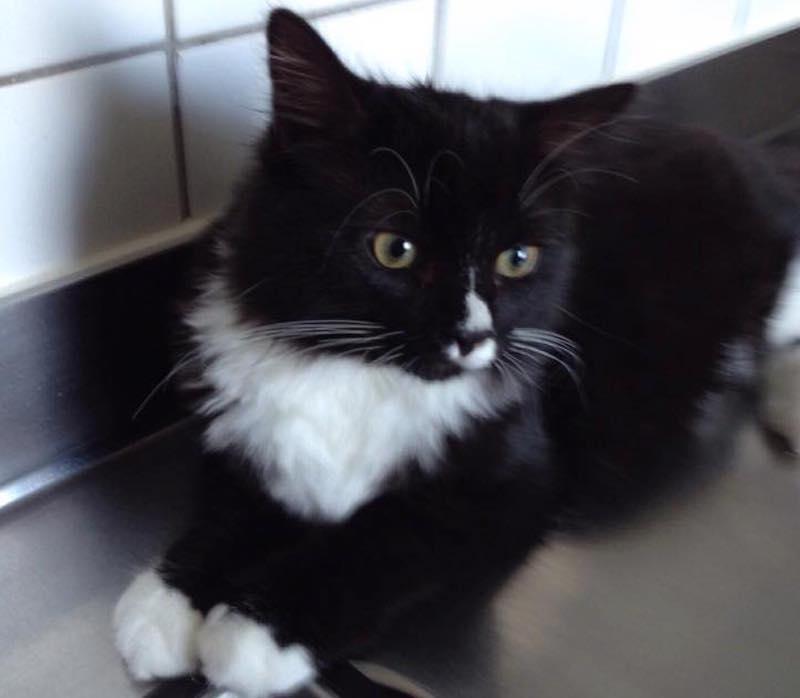 Svart katt på diskbänken