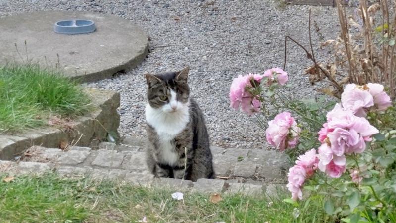 Katt med bara ett öga