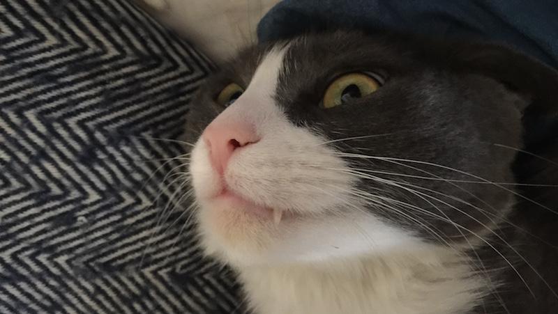 Katt humor