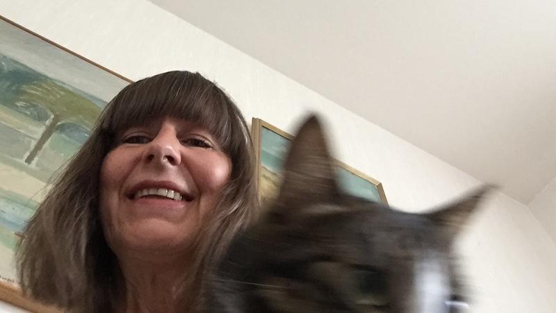 Selfie katt
