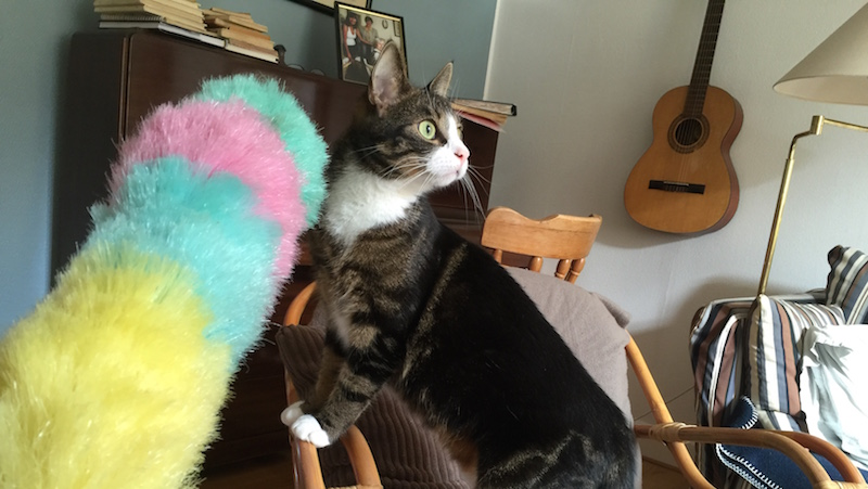 Katter hjälper till att städa
