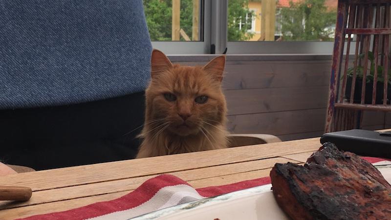 Katt sitter vid bordet och väntar på maten