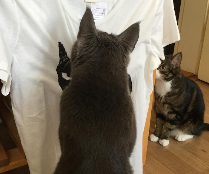 Katter undersökter t-shirt med katt