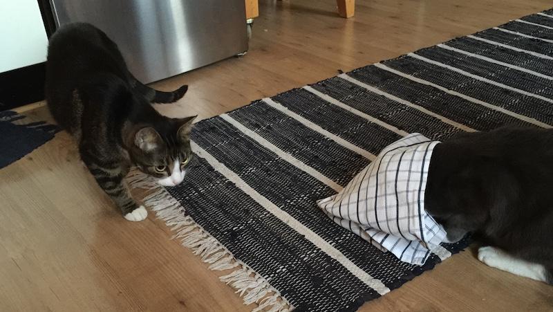 Katt gömmer sig i handduk