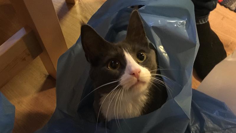 Katt i påse