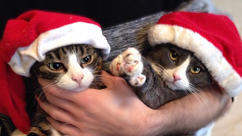 Katter i tomteluva