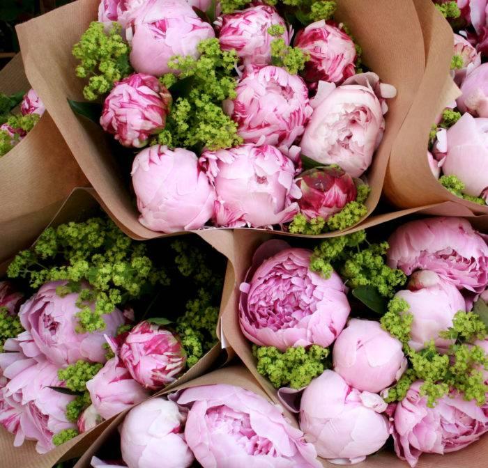 Satsa på riktigt klar grönska som utfyllnad till de rosa pionerna för ett piggt intryck.